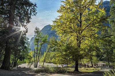 Photograph - The Tree By Sentinel Bridge by Belinda Greb