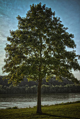 Photograph - The Tree by Daniel Houghton