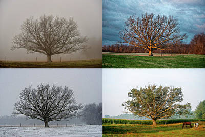 Photograph - The Tree by David Arment