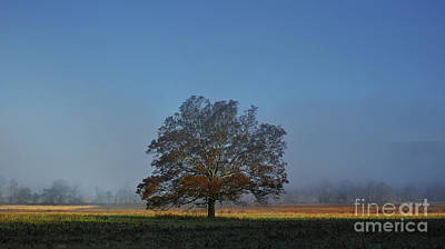 Photograph - The Tree by Douglas Stucky