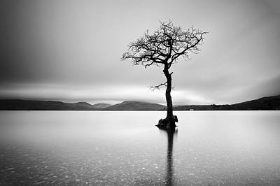 Photograph - The Tree by Grant Glendinning