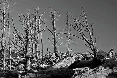 Photograph - The Tree Graveyard by Inge Riis McDonald