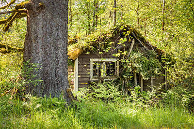 Photo Royalty Free Images - The Tree House 00107 Royalty-Free Image by Kristina Rinell