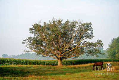 Photograph - The Tree In August by David Arment