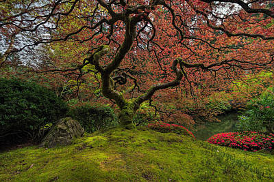 North America Photograph - The Tree In Spring by David Gn