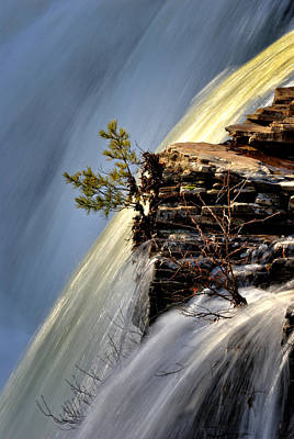 Photograph - The Tree In The Falls by George Taylor