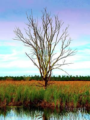 Photograph - The Tree In The Marsh by Judi Bagwell