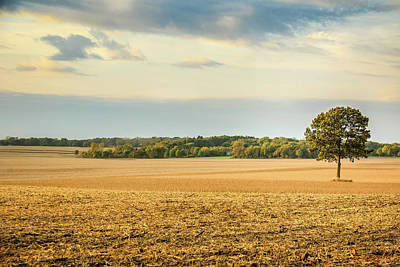 Photograph - The Tree In The Middle Of The Cornfield by Joni Eskridge