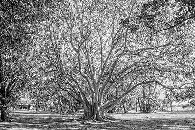 Photograph - The Tree In The Middle by Taschja Hattingh