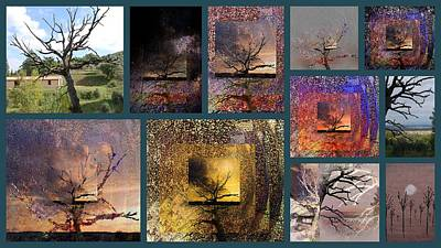 Photograph - The Tree Layers Collection Story Board by Dorothy Berry-Lound