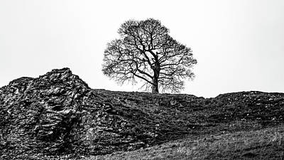 Photograph - The Tree by Makk Black
