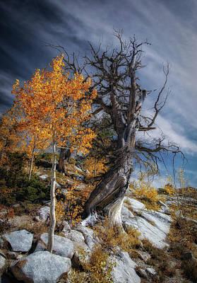 Just Desserts - The Tree by Mitch Johanson