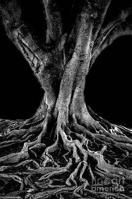 Photograph - The Tree  by Mitch Shindelbower
