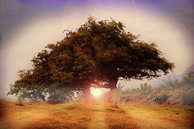 Element Photograph - The Tree Of Light by Martin Newman