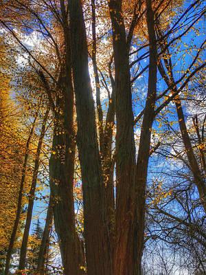 Katsura Wall Art - Photograph - The Tree Of Many Trunks  by Connie Handscomb