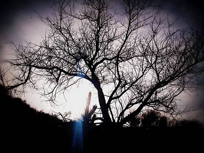 Photograph - The Tree Of Wisdom by Nature Macabre Photography