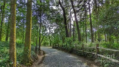 Photograph - The Tree Road by Pedro Venancio