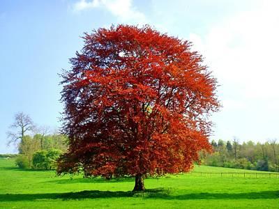 Photograph - The Tree by Roberto Alamino