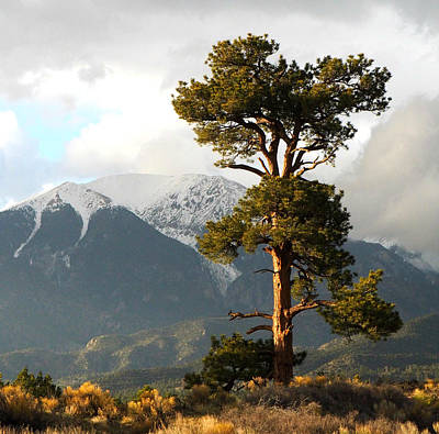 Great Sand Dunes Photograph - The Tree by Ryan Scholl