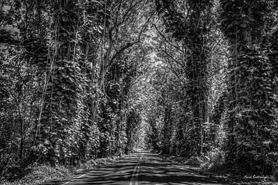 Photograph - The Tree Tunnel B W South Shore Kauai Hawaii  Eucalyptus Tree Art by Reid Callaway