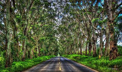 Photograph - The Tree Tunnel South Shore Kauai Hawaii Eucalyptus Tree Art by Reid Callaway