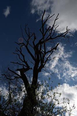 The Treeness Of A Tree Art Print