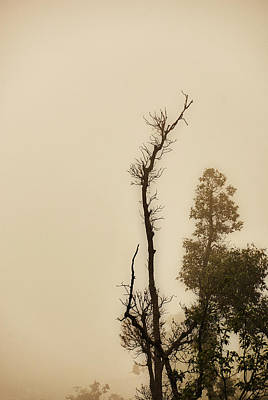 Photograph - The Trees Against The Mist by Rajiv Chopra