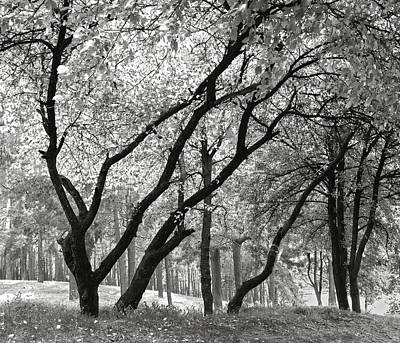 Photograph - The Trees Dancing. Chernihiv, 2014. by Andriy Maykovskyi