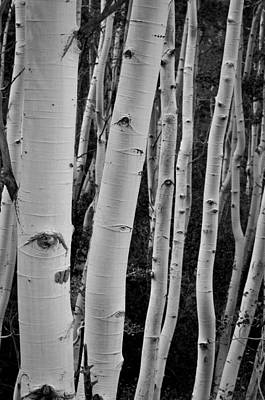 Photograph - The Trees Have Eyes by Kevin Munro