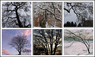 Photograph - The Trees Of Winter - A Collage by Dora Sofia Caputo Photographic Design and Fine Art