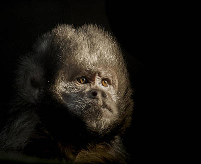 Primate Photograph - The Trial by Paul Neville