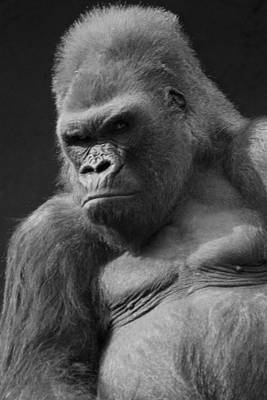 Gorilla Wall Art - Photograph - The Troop Leader by Brad Scott