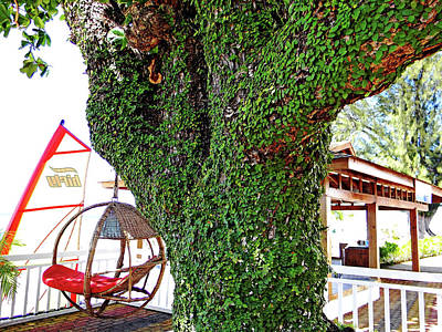 Photograph - The Tropics Are Calling by Debbie Oppermann