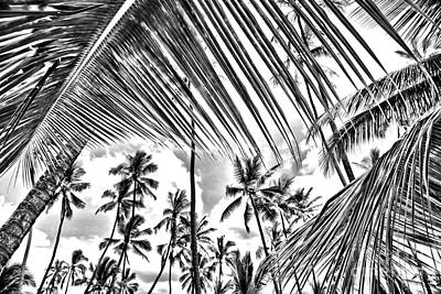 Print featuring the photograph The Tropics by DJ Florek
