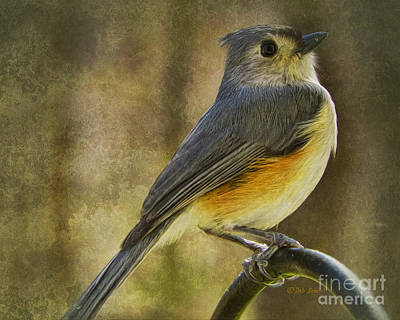 Titmouse Painting - The Tufted by Deborah Benoit