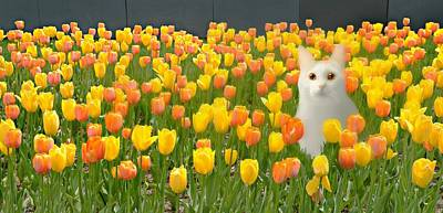 Photograph - The Tulip Cat by Diana Angstadt