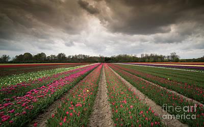 Photograph - The Tulip Field by Giovanni Malfitano