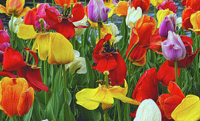 Photograph - The Tulip Garden by Nadalyn Larsen