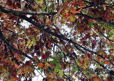 Photograph - The Turning Leaves by Lydia Holly