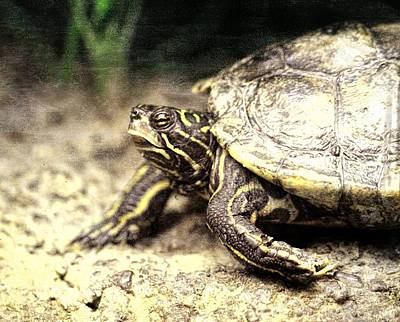 Turtle Photograph - The Turtle by Dan Sproul