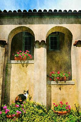 Photograph - The Tuscan Cat by Diana Angstadt