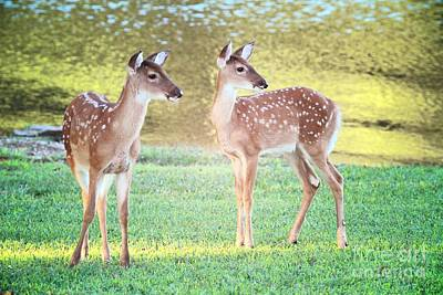 Twin Fawns Photograph - The Twins by Geraldine DeBoer