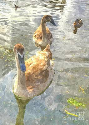 Mixed Media - The Two Cygnets by Abbie Shores