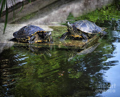 Digital Art - The Two Turtles by Stephan Grixti