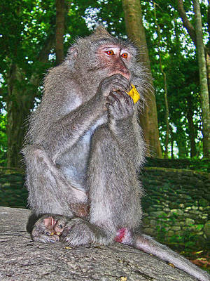 Paradise On Earth Photograph - The Ubud Monkey Forest. Bali. by Andy Za