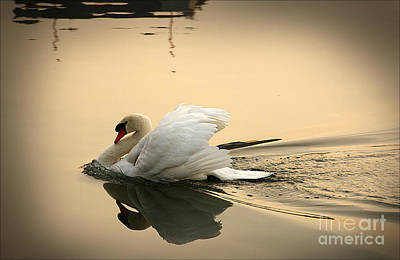 Photograph - The Ugly Duckling by Eena Bo