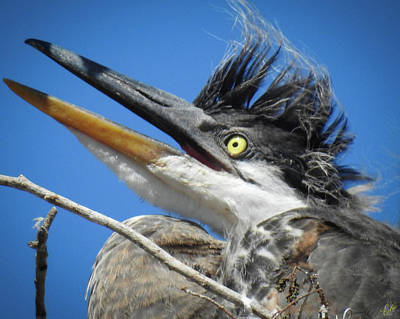 Photograph - The Ultimate Faux Hawk by Elie Wolf