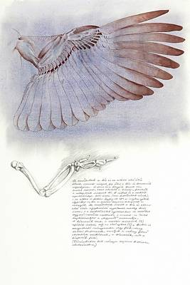 Painting - The Underside Of The Pheasant Wing by Attila Meszlenyi
