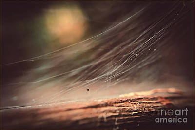 Photograph - The Universe In A Web by Cendrine Marrouat