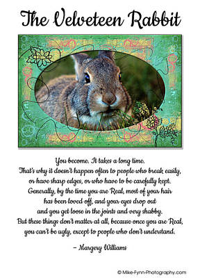 Photograph - The Velveteen Rabbit by Mike Flynn